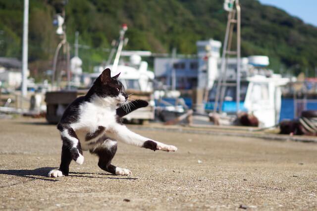 低い姿勢で構える猫、つま先立ちする猫(ネコ写真集「のら猫拳」)