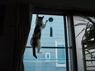 網戸を登る猫の写真