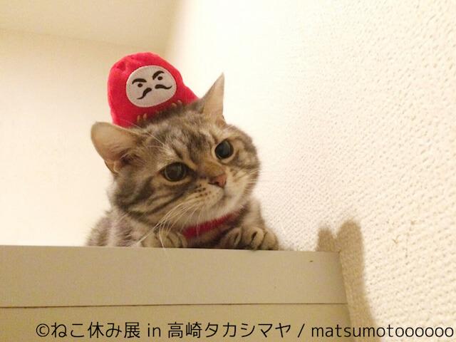 matsumotooooooのネコ写真作品