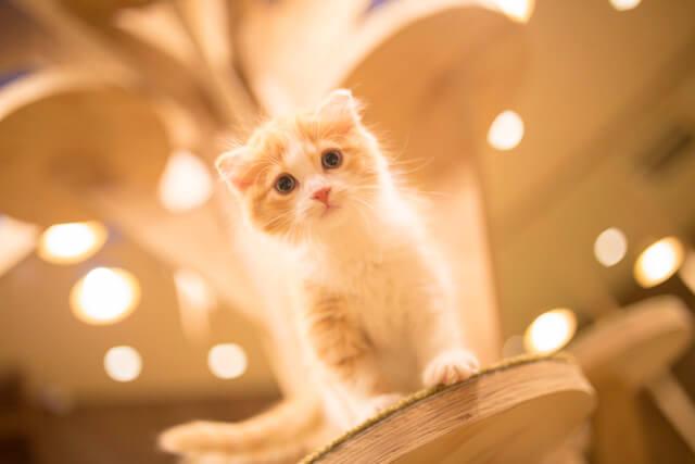 猫カフェ「MoCHA(モカ)」心斎橋店の猫写真2
