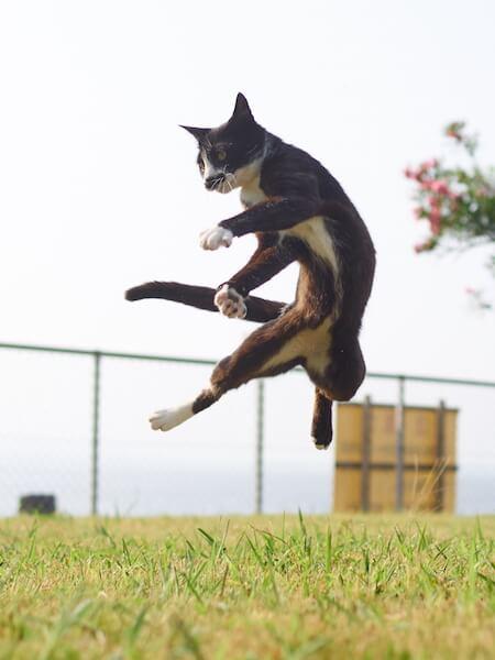空中浮遊する猫(ネコ写真集「のら猫拳」)
