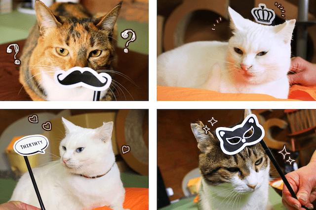 愛猫の写真を撮る時にフォトプロップスとして使える絵柄付き