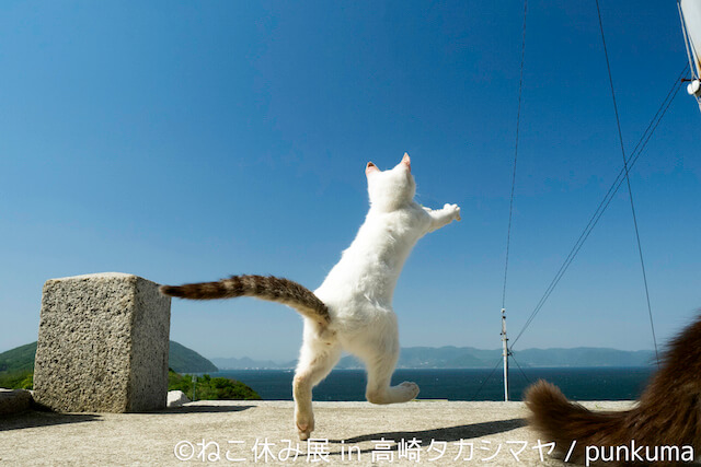 punkumaのネコ写真作品