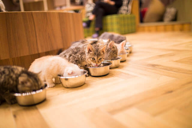 猫カフェ「MoCHA(モカ)」心斎橋店のご飯タイム
