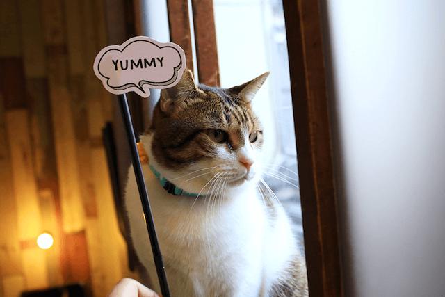 フォトプロップスを使って猫と写真撮影