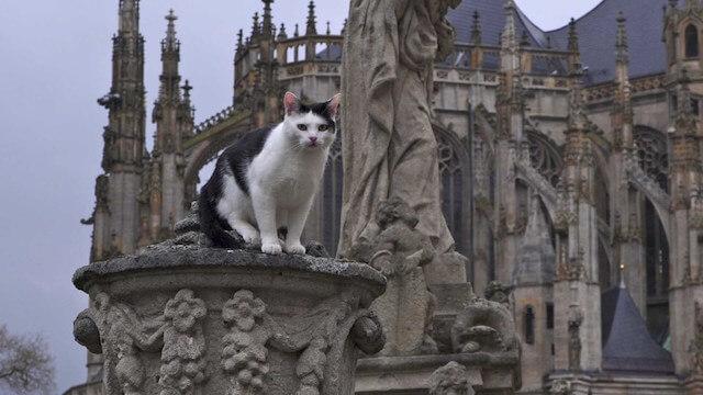 世界ネコ歩き、チェコのお城に暮らす猫