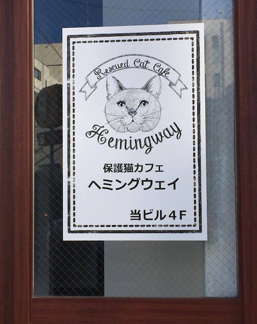 名古屋市の今池にオープンした保護猫カフェ「ヘミングウェイ」