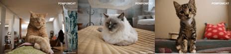ロサンゼルス発・猫と愛猫家のオシャレなライフスタイル紹介しているサイトPOMPOMCAT(ポンポンキャット)