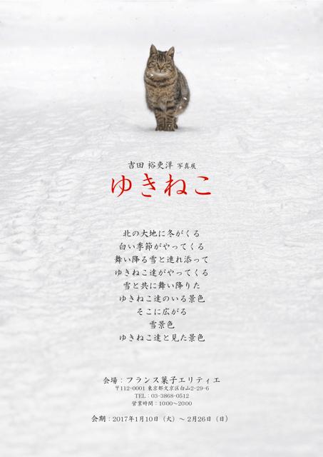 吉田裕吏洋 写真展 「ゆきねこ」