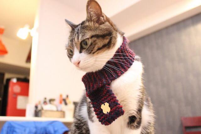 猫用のファッションアイテム「ネコマフラー(necomuffler)」