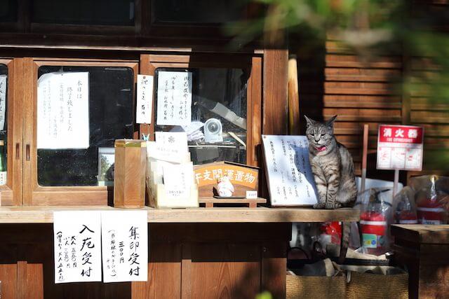 フォトブック「京のにゃんこ」に登場する、看板猫