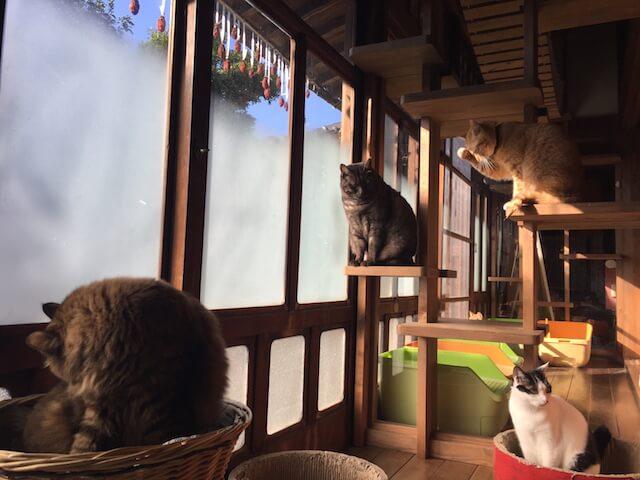 猫カフェ「Cafe Gatto」で日向ぼっこをする猫たち