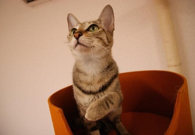 つくばわんわんランドの「ねこハウス」にいる猫の写真2