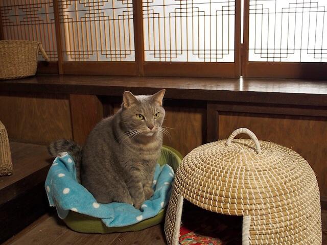 保護猫カフェ「Cafe Gatto」には猫ちぐらも