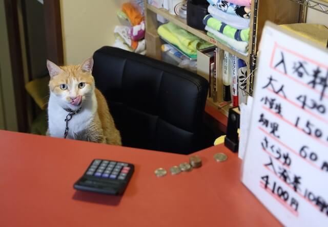 フォトブック「京のにゃんこ」に登場する、銭湯の看板猫