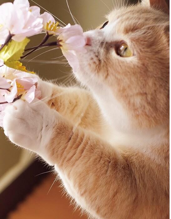 写真集「ねこのおてて」に収録されている猫の手7