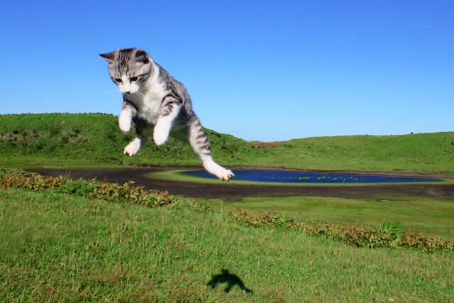 ジャンプするニャン吉