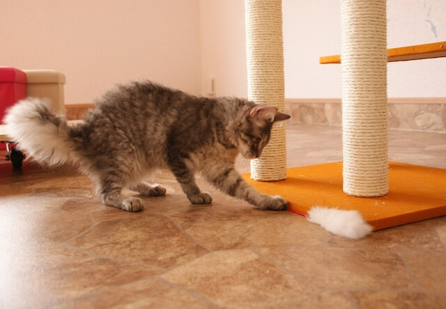 つくばわんわんランドの「ねこハウス」で遊んでいる猫