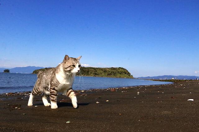 砂浜を歩くニャン吉