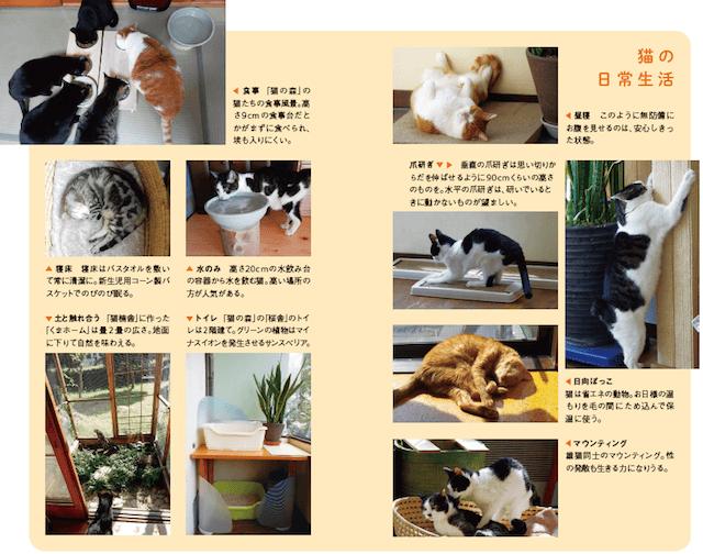 書籍「猫の學校」の中身イメージ3