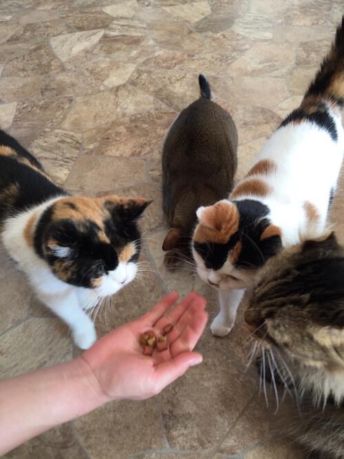 つくばわんわんランドの「ねこハウス」で猫にオヤツをあげる様子