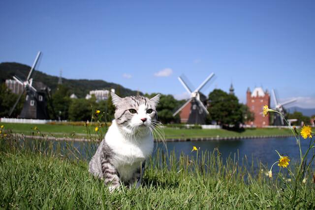 風車の見える風景で佇むニャン吉