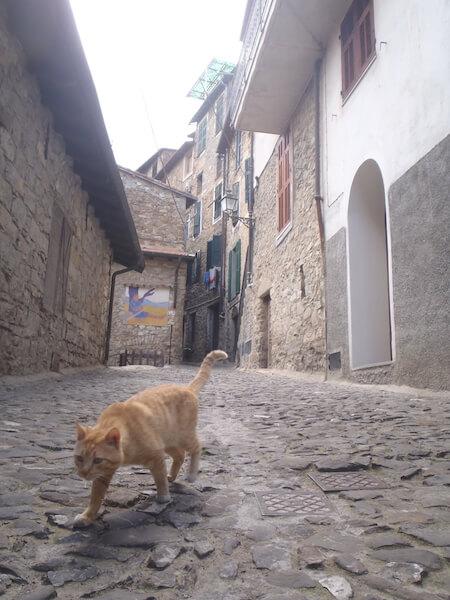 アニマルプラネット、世界ねこ散歩~イタリア~の放送シーン1