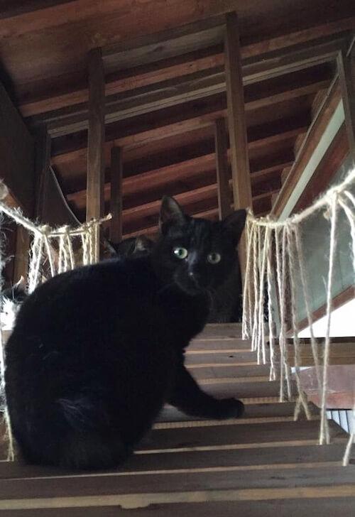 吊り橋式のキャットウォークで驚く猫