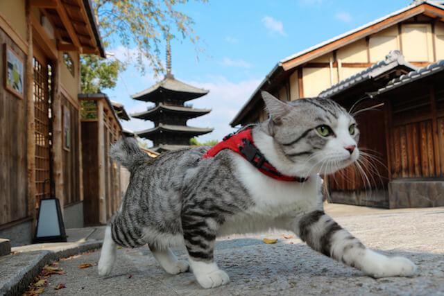 京都の街を歩くニャン吉