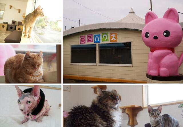 つくばわんわんランド内にある猫まみれの館「ねこハウス」