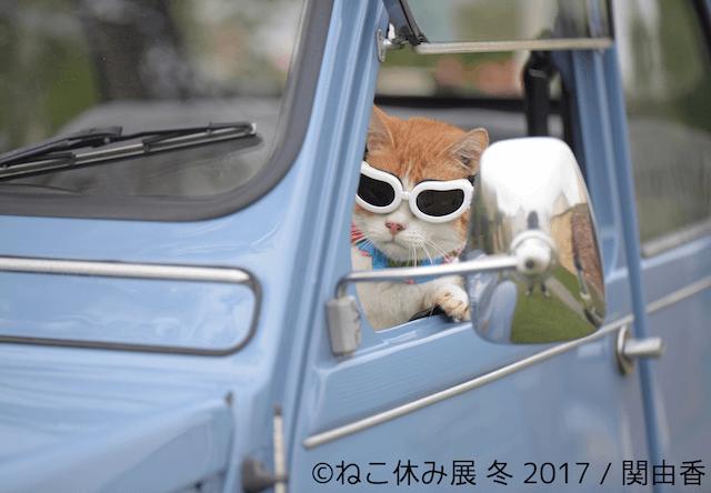 猫まみれの1ヶ月間!「ねこ休み展 冬 2017」が1/27から開催
