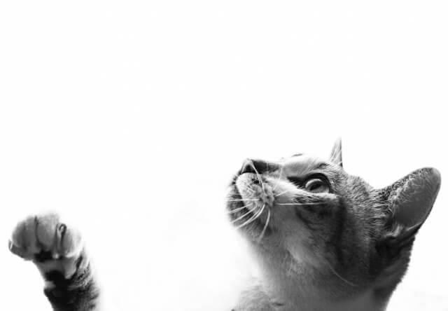 猫のイメージ写真
