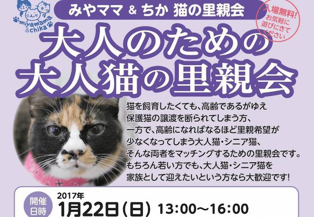 大人の猫のための里親募集会、1/22に大阪・福島駅近くで開催