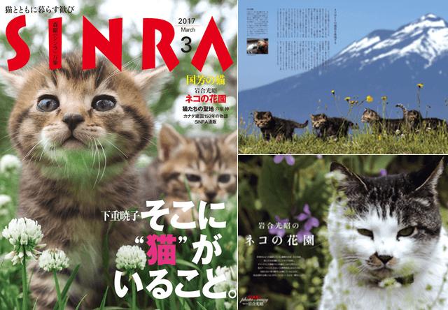 雑誌SINRA(シンラ)の最新号は猫特集!巻頭グラビアに岩合光昭氏