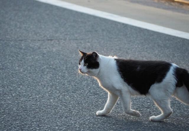 宇都宮市で猫の不思議について学べる「猫の目講座」が開催