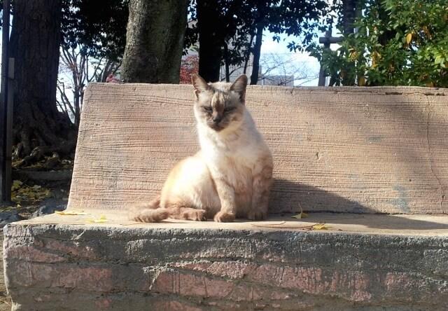 おだわらの猫を考える、「ねこフォトコンテスト」の猫写真イメージ
