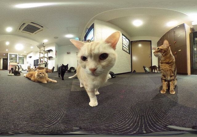 猫カフェ「きゃりこ 新宿店」、360°カメラを無料で貸出中