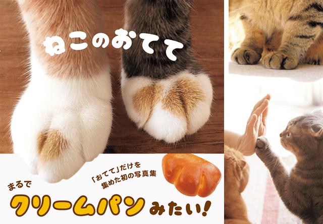 猫の手だけを収録したマニアックな写真集「ねこのおてて」