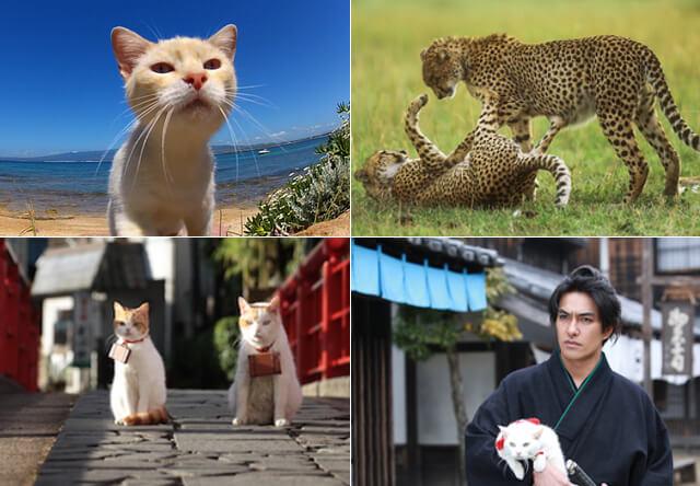 2月のアニマルプラネットは猫特集!猫ドキュメンタリーや猫ドラマなど