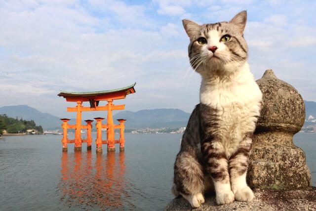 厳島神社の大鳥居とニャン吉