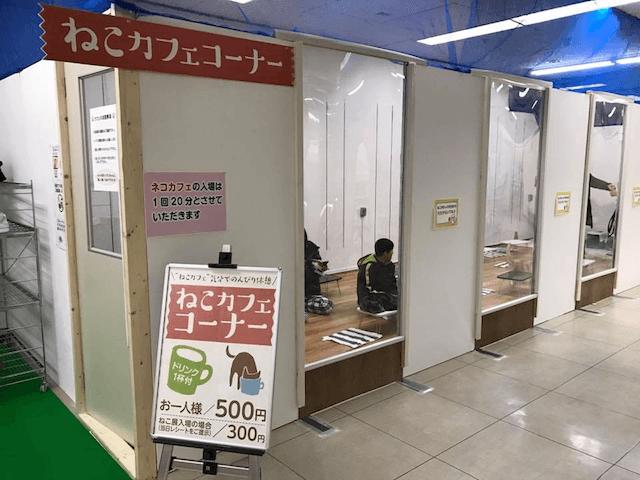 百貨店・三春屋で開催中「ふれあい ねこ展」のねこカフェコーナー