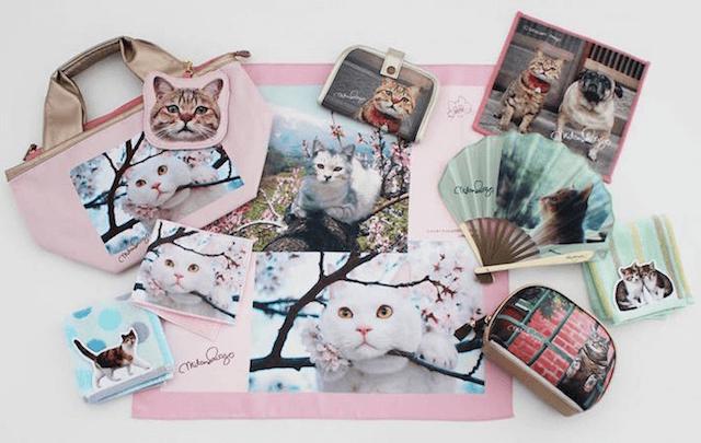 全国の百貨店で発売される猫グッズ「岩合光昭のねこ」