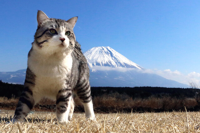 富士山とニャン吉