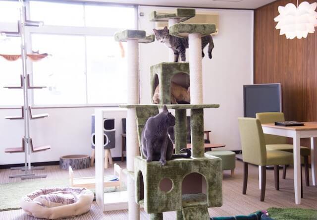 保護猫カフェ「ヘミングウェイ」にある大きなキャットタワー