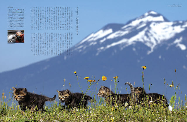 雑誌「SINRA(シンラ)」3月号、岩合光昭さんのエッセイ