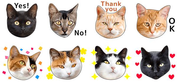 猫のLINEスタンプ「かわいい猫顔&肉球♪」のイメージ2