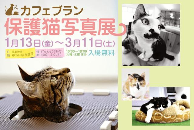 東急リバブルの展示スペース「コミュニティプレイス」で開催、猫カフェブランの保護猫写真展