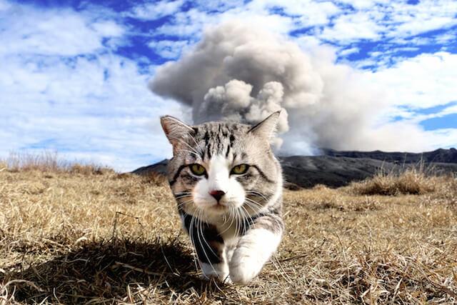 噴煙の上がる阿蘇山をバックに歩くニャン吉