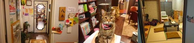 cat cafe nyanny 秋葉原店の店内イメージ2