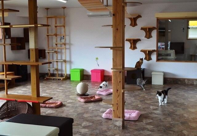 つくばわんわんランドにある「ねこハウス」の室内イメージ